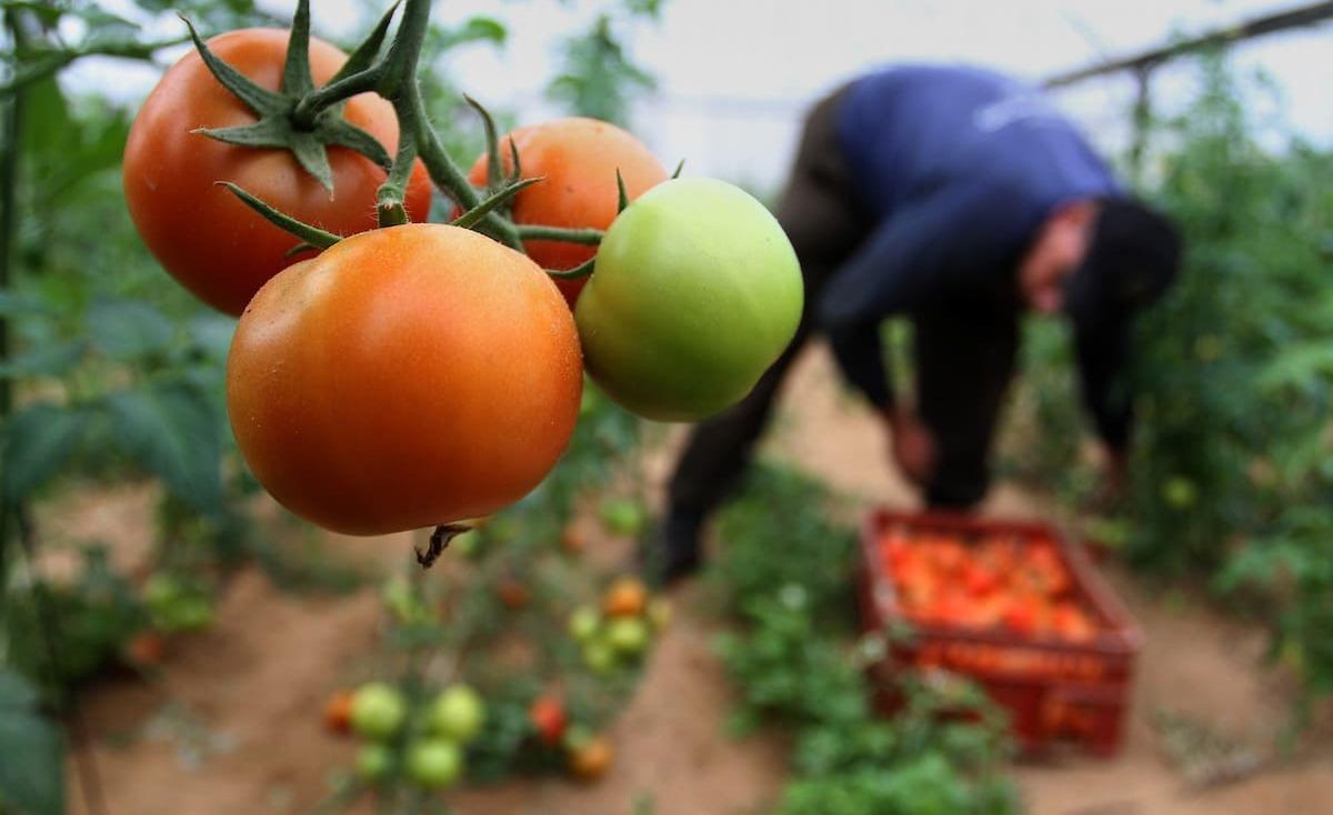 غزة .. ارتفاع أسعار الخضروات يهدد الأسواق بركود أكبر (فيديو)