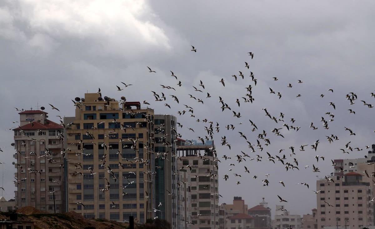 الأرصاد الجوية: توقعات بسقوط أمطار اليوم وغدًا