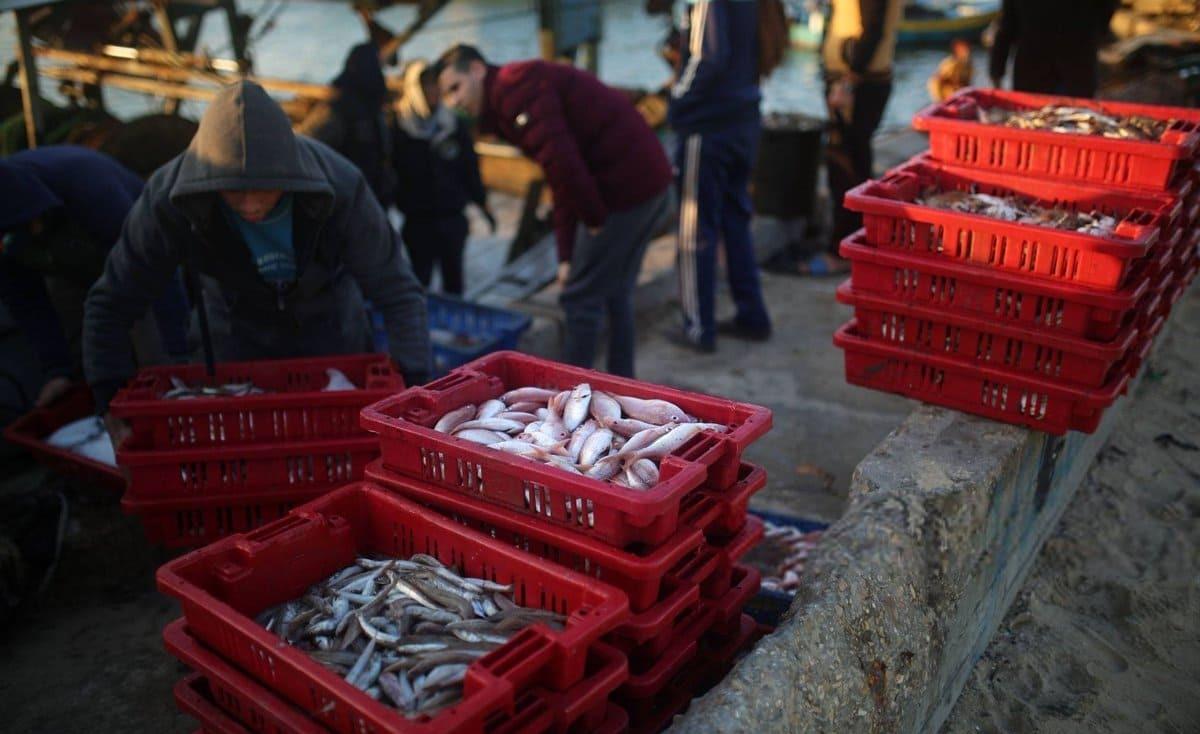 """غزة: أسماك شحيحة أسعارها مرتفعة وتوقعات بقرب وصول """"الأسماك الشعبية"""""""
