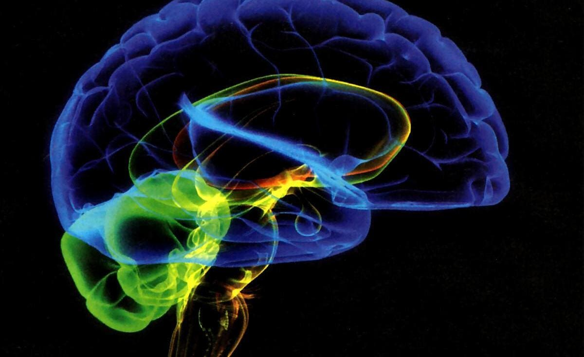 دراسة تكشف نوع طعام يحسن وظائف المخ