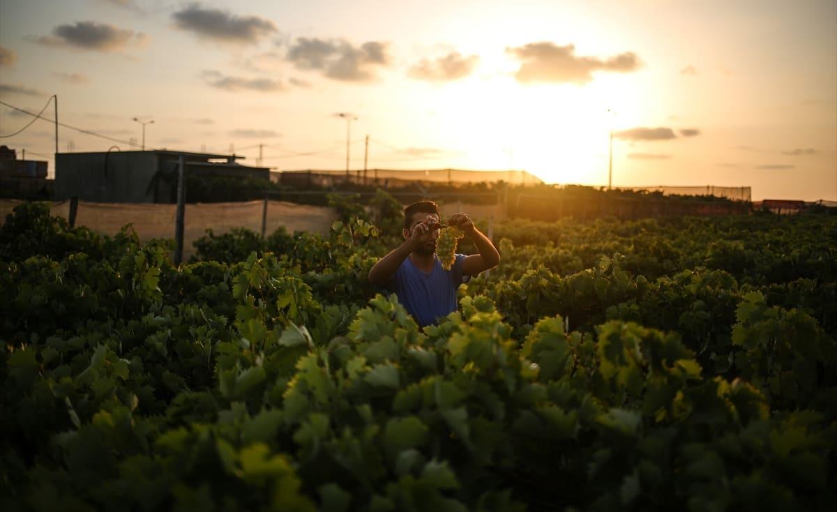 الديون تُجبر مزارعي غزة على بيع أراضيهم