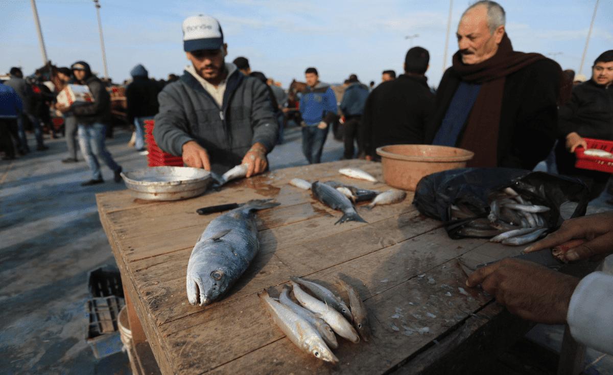 بعد اتفاق التهدئة.. صيادي غزة يشتكون قلة الأسماك