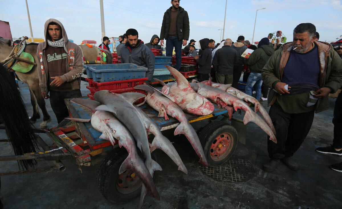 أسعار السمك بغزة نحو الإنخفاض