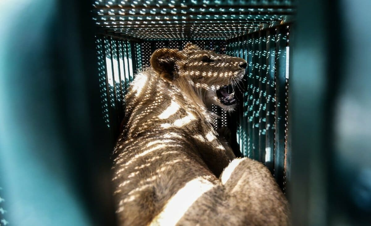 الحصار يفترس ثالث حديقة حيوان في غزة