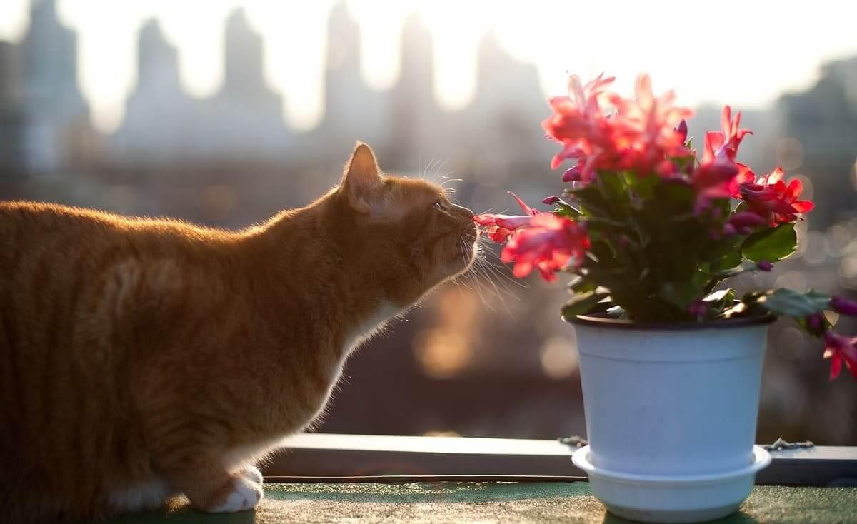 قطة بسبعة أرواح تنجو بعد غسلها في الغسالة لمدة 30 دقيقة