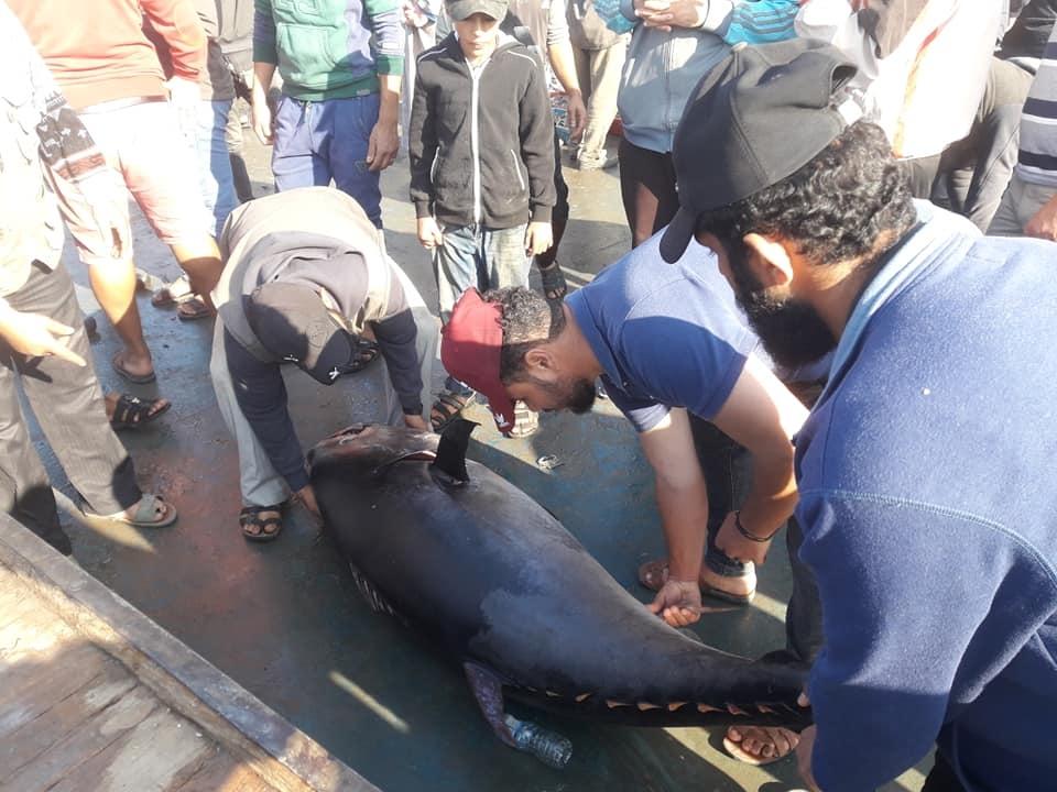 اصطياد سمكة وبيعها بآلاف الشواقل في غزة (صور)
