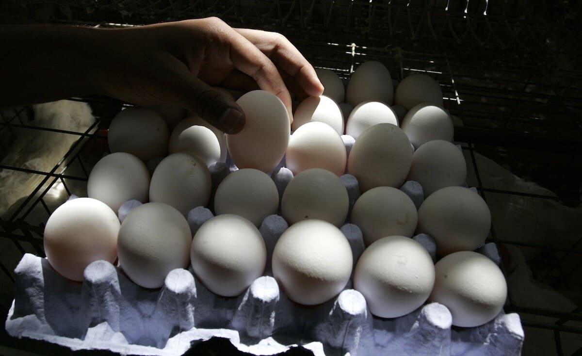 """كرتونة البيض بـ (13) شيقل.. و""""الزراعة"""" بغزة تكشف السبب"""