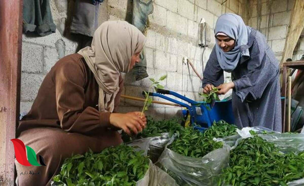 سيدات غزة يتغلبن على الحصار لتوفير لقمة العيش