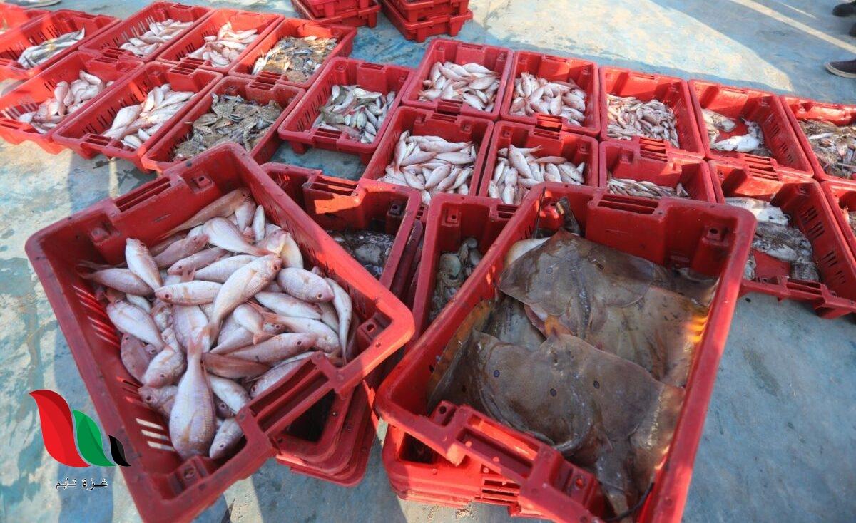 أسعار اللحوم والدواجن والأسماك والخضار والفواكه في أسواق غزة اليوم السبت 27 يونيو 2020