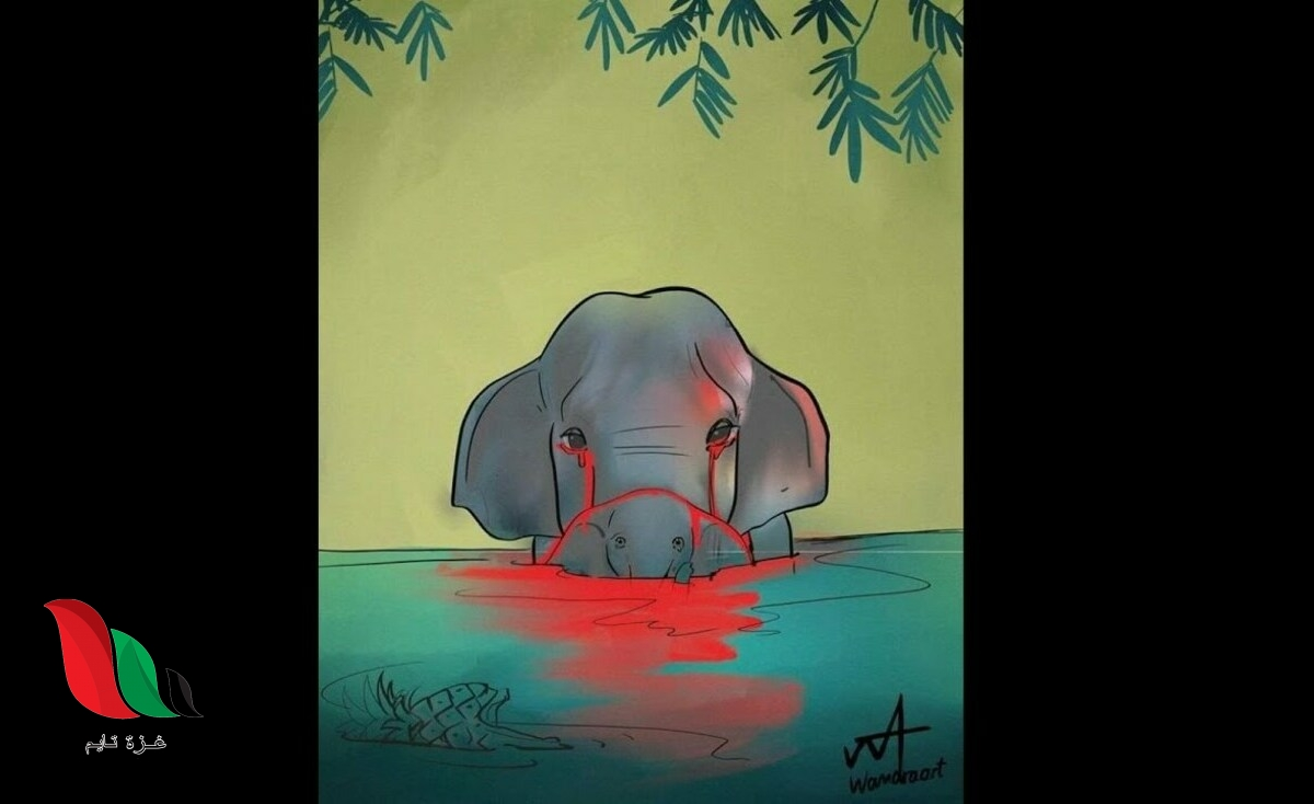 شاهد: تفاصيل قصة انثى الفيل الحامل في الهند