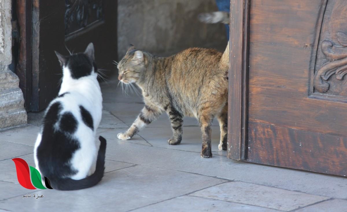 لماذا تختفي القطط يوم عيد الأضحى .. اسلام ويب يجيب