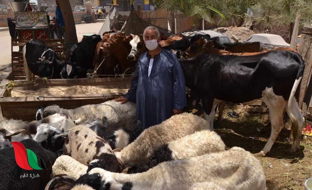 ما هو حكم تصوير الاضحية عند الذبح في عيد الاضحى المبارك