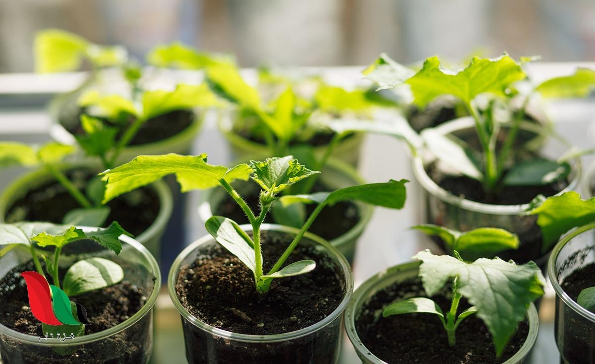 الفرق بين التكاثر في النباتات المغطاة البذور والنباتات المعراة البذور