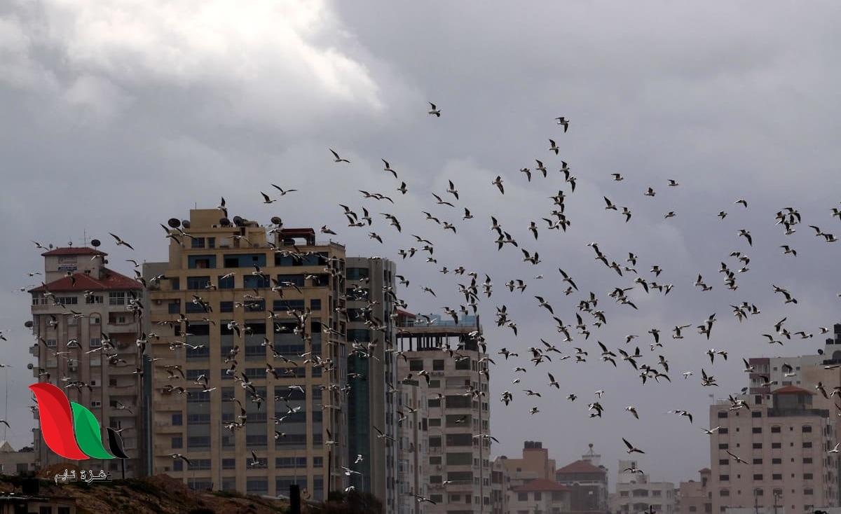 الشتاء سيتجدد في غزة.. حالة الطقس هذا الأسبوع وفرص سقوط أمطار
