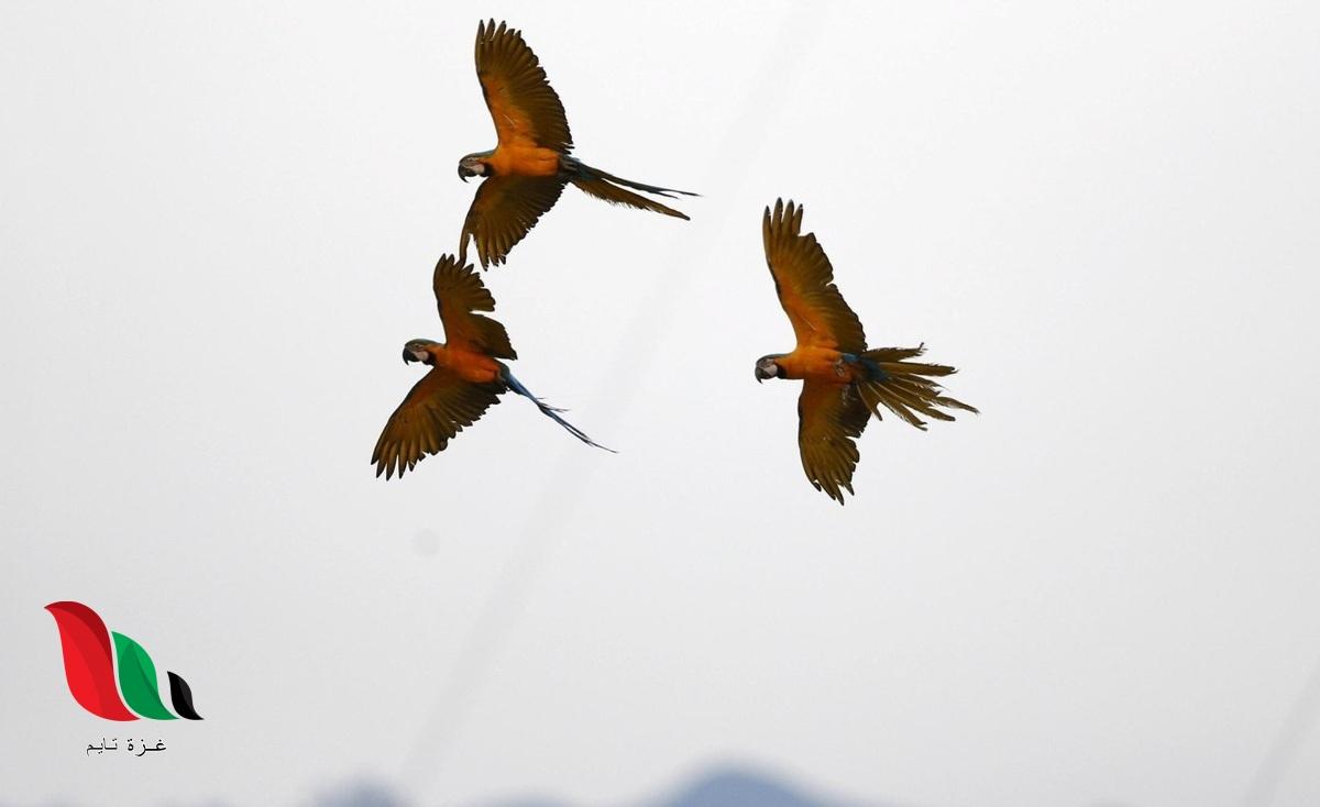 اي التكيفات التاليه تساعد الطيور على الطيران بصوره افضل ؟